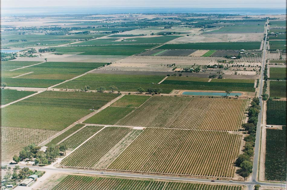 Aerial View Hamiltons Ewell Vineyards 1950s