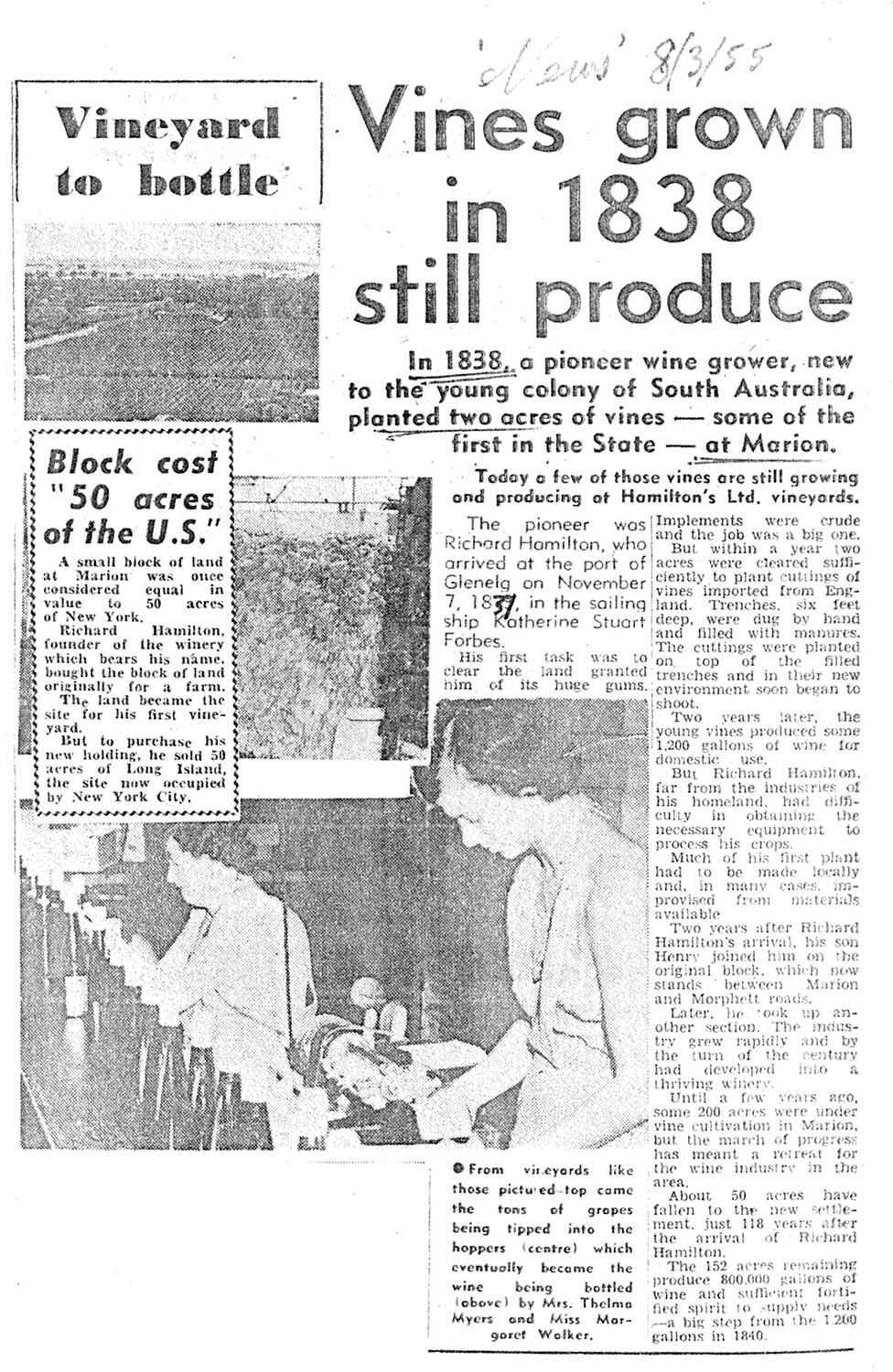Vineyard article The News 8 March 1955