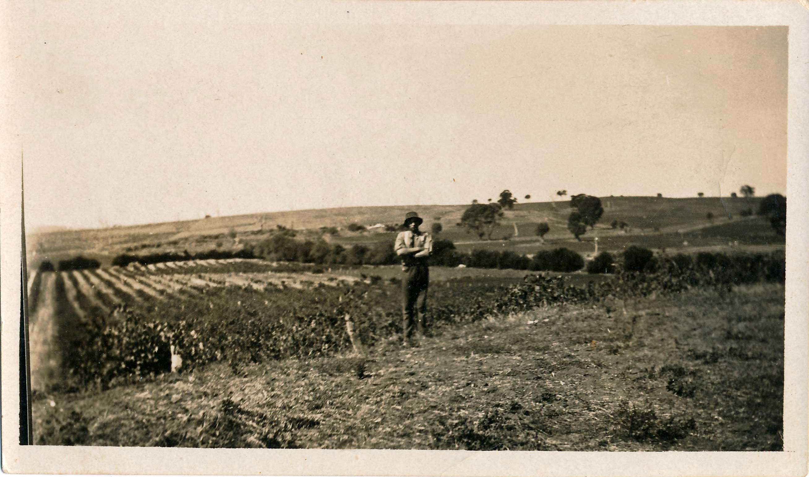 Worker in Stonegarden vineyards c1870s