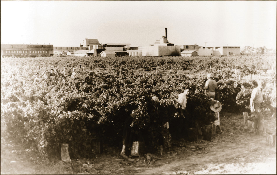 Workers in Ewell Vineyard Glenelg 1960s