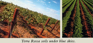 Terra Rossa soils under blue skies.